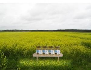 Amelander mosterdveld