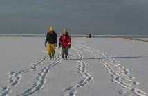 wadlopen_winter_sporen